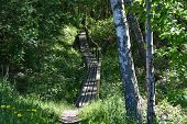 Footpath With A Wooden Bridge And Handrails In A Green Forest At The Swedish Island Oland poster