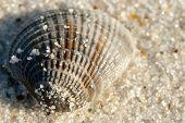 stock photo of sabbatical  - Seashell on the seashore in the sand - JPG