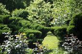Work In The Garden. Shearing Of The Juniper With Gardening Scissors, Soft Focus. Garden Art/ Design/ poster