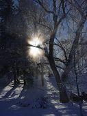 Sun Flare Giant Springs