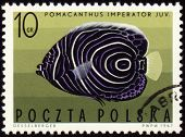 Imperial Angelfish (pomacanthus Imperator) On Post Stamp
