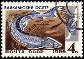 Baikal Sturgeon On Post Stamp