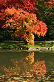 Arboretum, Seattle Japanese Garden #10
