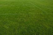 Green Grass Field. Background Texture Green Grass. Soccer Field With Green Grass. poster