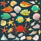 Collection With Shell, Starfish, Fish, Stone. Vector Set For Design In Sea Beach Style. Colored Exot poster