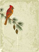 stock photo of cardinal-bird  - vector retro Christmas background with Cardinal bird - JPG