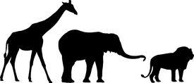 picture of jungle animal  - a giraffe - JPG