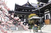 Ancient pavilion, incense pot in Hasedera (Hase-dera) temple and sakura blossom branches. Sakura blo poster