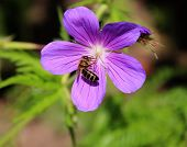 Flower and a Bee