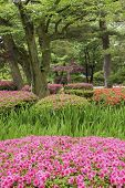 Colorful Flower In Garden In Springtime Season. Natural Background poster