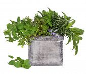 Herb leaf and flower selection of rosemary, thyme, sage, oregano in a distressed decorative wooden b