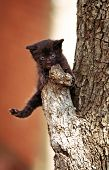 Little Black Kitten On A Branch Of A Tree