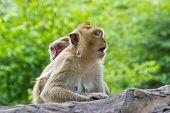 Forest Monkey Is Is Bingfrightened