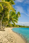 Palm trees over tropical lagoon at Fiji Islands