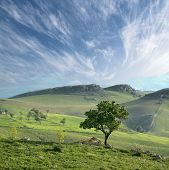 solitary tree in a green valley on sicilian hinterland hills