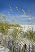 Sea Oats And Dune Fence