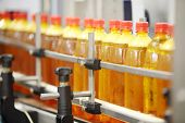 Many yellow plastic bottles with fresh beer go on conveyor at large brewery.