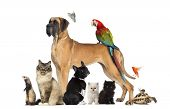 stock photo of petting  - Group of pets  - JPG