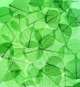 green leaves surface  texture