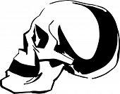 Black and white sketch of skull