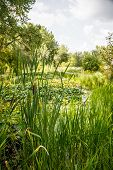 stock photo of cattail  - Cattails and grasses in a wetland marsh - JPG