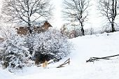 Bulgarian Winter Meadows