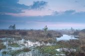Foggy Sunset Over Swamp With Cotton-grass