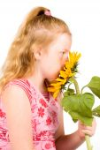 Girl Is Smelling A Big Sunflower