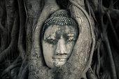 buddha's head, Ayutthaya, Thailand
