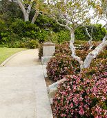 Walkway With Blooming Bushes Along Side. Laguna Beach Trip