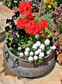 Colorful flowers in the old cauldron