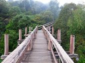 Amazon Trail Ecotourism Forest