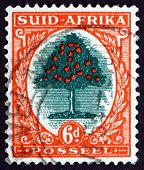 Postage Stamp South Africa 1941 Orange Tree