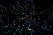 picture of refraction  - Close up of colors refracted on  a dewy spider web - JPG