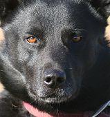 Dog Glare