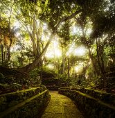 Trees in Monkey Forest in the city of Ubud. Bali, Indonesia