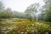 A Lichen covered clearing in a foggy Forest