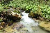 stock photo of garden eden  - mountain stream - JPG