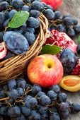 Fresh Autumn Fruits