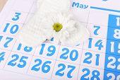 Sanitary pads, calendar and white flower on blue calendar background