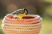 titmouse rope