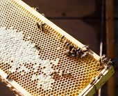 Wooden frame with bee honeycombs filled with honey and bees