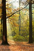 Sunshine Lit Glade In Autumn Forest