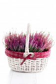 basket full of heather - flowers and plants