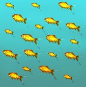 pic of freshwater fish  - Illustrative background of many red freshwater fish - JPG