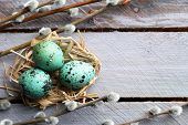 picture of bird-nest  - Bird colorful eggs in nest and pussy willow branches on wooden background - JPG