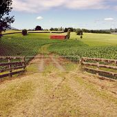 pic of red barn  - Red barn in corn field - JPG