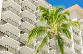 stock photo of palm  - Palm tree tops against apartment or hotel building and blue sky - JPG