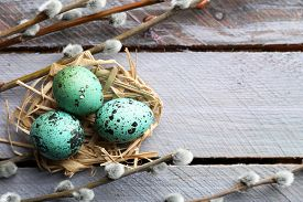 picture of quail egg  - Bird colorful eggs in nest and pussy willow branches on wooden background - JPG