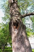 image of hollow  - with a hollow tree and swirling spiral bark - JPG